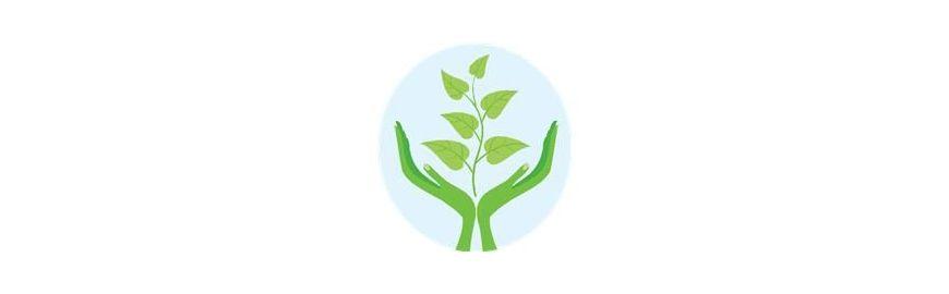 Plantas Simples